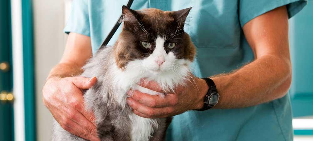 Preventive Pet Healthcare
